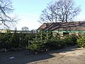Christmas trees for sale at Oakley Farm - geograph.org.uk - 1626399.jpg