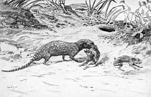 Pachyrukhos - Restoration of Cladosictis lustratus attacking Pachyrukhos moyani