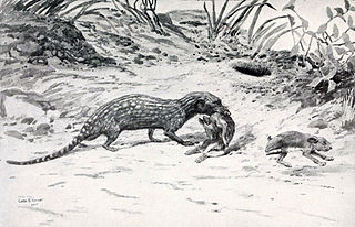 <i>Pachyrukhos</i> genus of mammals (fossil)