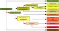 Classification phylogénétique1.png
