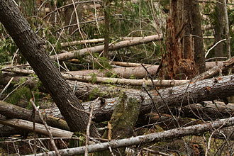 Coarse woody debris - Coarse woody debris may contribute to the intensity of wildfire.