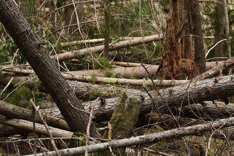 Coarse woody debris 6407