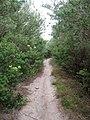 Coast Track - panoramio (74).jpg