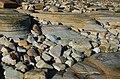 Coastal Erosion (61391491).jpeg