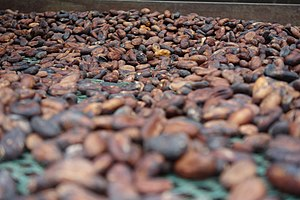 Cocoa beans in Guadeloupe