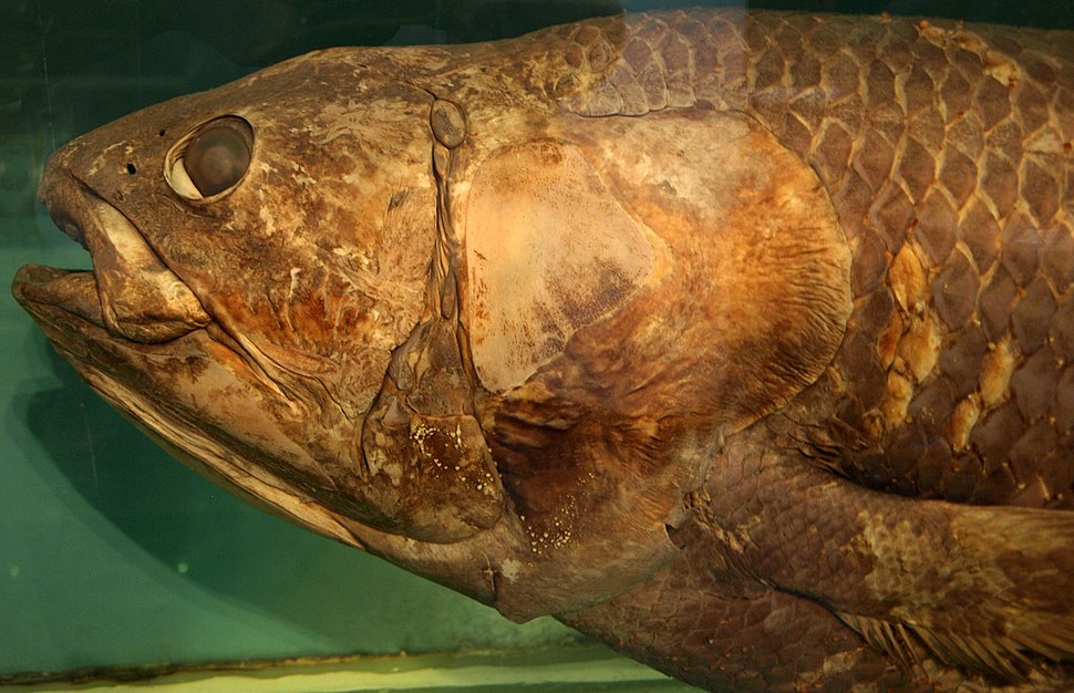 Coelacanth-PaleozoologicalMuseumOfChina-May23-08