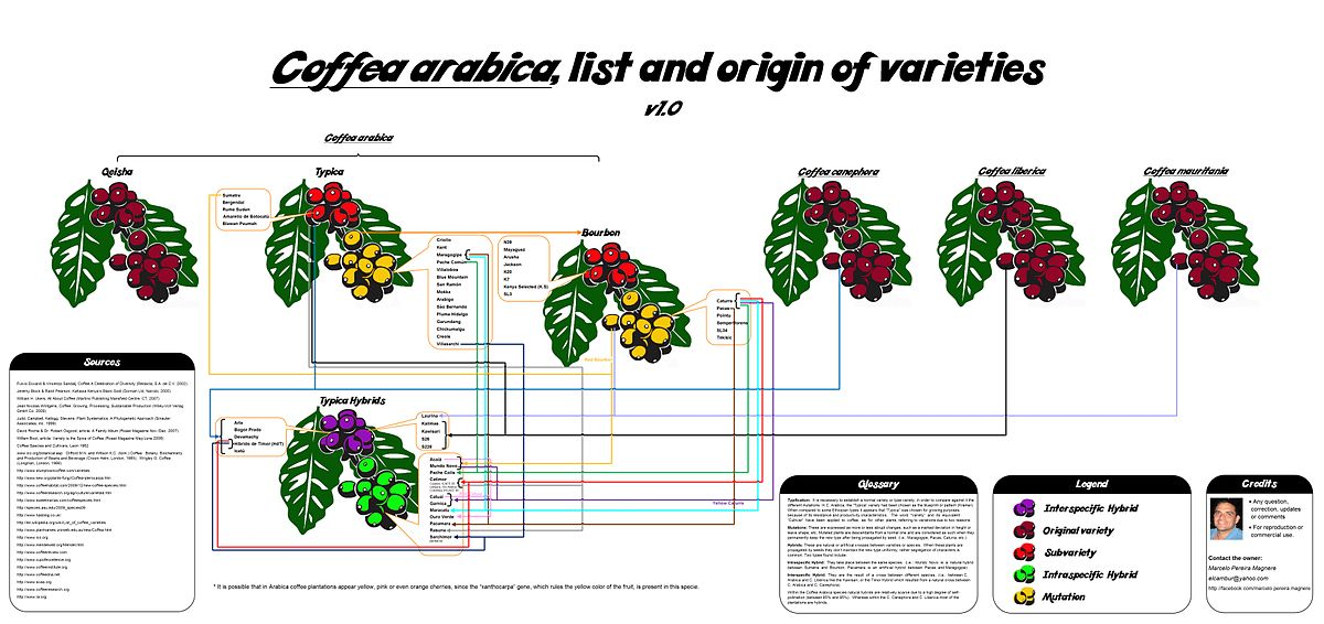 List Of Coffee Varieties Wikipedia