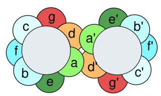 Leucine zipper DNA-binding structural motif