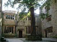 A courtyard in a medieval building with a large yew tree growing in the centre.