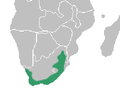 Corycium distribution map.png