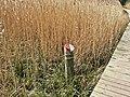 Cosmeston Lakes - pathside marker - geograph.org.uk - 1219292.jpg