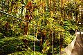 Costa Rica, Central America, Bridge, Forest.jpg