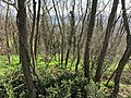 Costière du bois de Laie (Neyron, ZNIEFF) depuis le chemin des Grandes Terres (Neyron) - 2.jpg