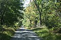 Country road - panoramio (1).jpg