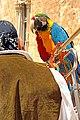 Croatia-01899 - Parrots? (10091272265).jpg