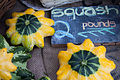 Cucurbita pepo scallop group First Root Farm CSA Fourteenth Pickup -4.jpg