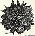 Currie's garden annual - spring 1936 61st year (1936) (20809153862).jpg