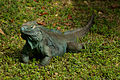 Cyclura lewisi -Queen Elizabeth II Botanic Park, Grand Cayman, Cayman Islands-8.jpg