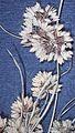 Cyperusacuminatus.jpg