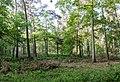 Dülmen, Naturschutzgebiet -Am Enteborn- -- 2014 -- 0187.jpg