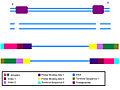 DNA prep for illumina sequencing.jpg