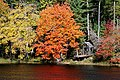 DSC03365 - Medway River (44642545714).jpg