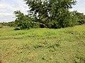 Dambulla, Sri Lanka - panoramio (102).jpg