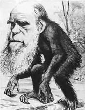 Caricature de Darwin en singe dans le magazine The Hornet
