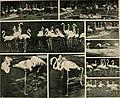 Das thierleben in Schönbrunn (1904) (20652697878).jpg