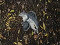 Dead Squirrel.JPG