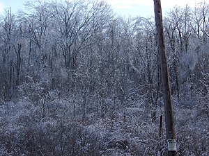December 2008 Northeastern United States ice storm - Image: December 2008 ice storm Dutchess County 3