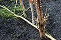 Deer 02.jpg