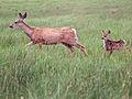 Deer family (7978154208).jpg