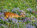 Deer in Paradise (7888744928).jpg