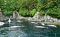 Delphinapterus leucas at Vancouver Aquarium.jpg