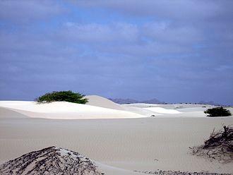 Wildlife of Cape Verde - The sand desert Viana on the island of Boa Vista, surrounded by rock desert