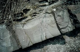 Sediment gravity flow - This turbidite from the Devonian Becke-Oese Sandstone of Germany is an example of a deposit from a sediment gravity flow. Note the complete Bouma sequence.