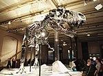 Dinosaurier Berlin naturkunde - 9.jpeg