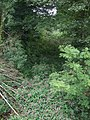 Disused railway bed at Pentre Berw - geograph.org.uk - 1440052.jpg