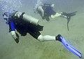 Divers (3113697256).jpg