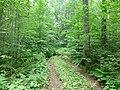 Dobryanskiy r-n, Permskiy kray, Russia - panoramio (183).jpg
