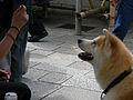 Dog -Ise.jpg