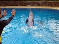 Dolphin Training (7980967024).jpg