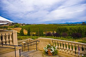 View of vineyards from the California wine pro...