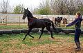 Donetsk Horse.JPG