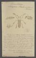 Doubledaya - Print - Iconographia Zoologica - Special Collections University of Amsterdam - UBAINV0274 037 01 0002.tif