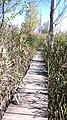 Dragoman marsh, Bulgaria 09.jpg