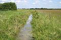 Drainage ditch near Waterloo Farm - geograph.org.uk - 452216.jpg