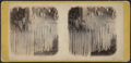 Drapery of ice, Kauterskill Falls, by E. & H.T. Anthony (Firm) 2.png