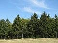 Drvece u parku (2).jpg